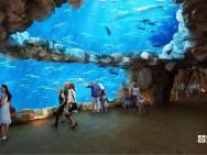 Nanchang Aquarium1
